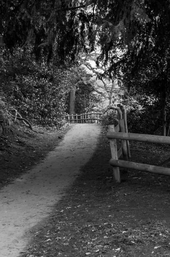 pathway-1