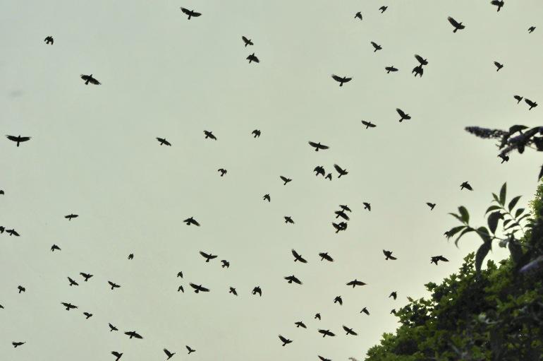 Birds in Solva